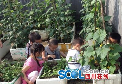 羊木镇老师幼儿园体验种植园分享采摘活动_广小学工资多少浙江的小学图片